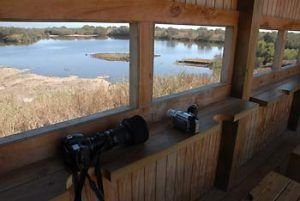 disfrutar del paisaje, de las aves, de la migración, naturaleza en vivo