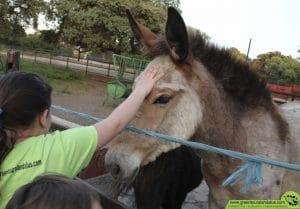 Disfrutando de los animales de la granja del campamento de Verano 2016