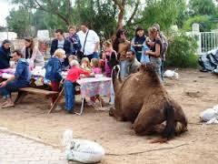 disfrutar de los camellos durante toda la visita, incluso durante el picnic