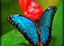 diferentes mariposas y orugas dentro de Mariposario