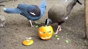 Divertida fiesta para los animales del centro bioparc,