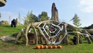 divertida visita por bioparc en halloween con niños y en familia. diversión para los animales tb