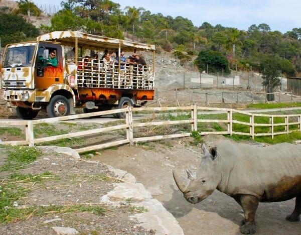 disfrutar de las diferentes zonas, habitats y especies, en camión todo terreno, el Selwo Aventura