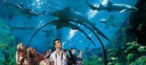 además de loros tienen un zoo marino fascinante