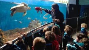 las visitas por todo el acuario son diarias, para grandes y pequeños,