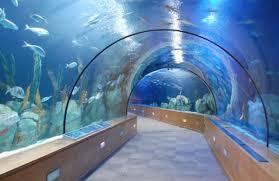 Diferentes actividades y visitas guiadas pueden disfrutarse en el acuario de Sevilla