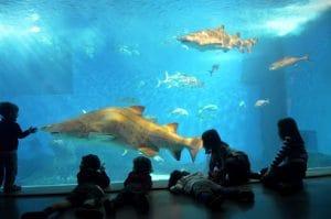 grandes y pequeños podrán disfrutar de la visita al acuario de sevilla, conociendo la biodiversidad del mar