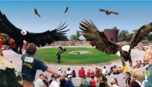un espectáculo de aves rapaces dónde podrán verlo volar y hasta darles de comer