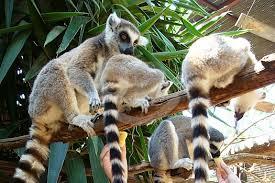zoo y acuarios, parques especializados en monos, diversión para toda la familia