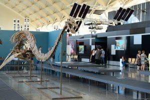 fosiles que se pueden conocer en el museo
