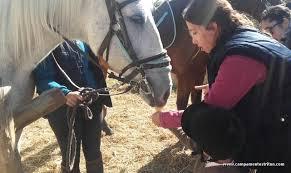 cuidar y aprender de los caballos y de la naturaleza