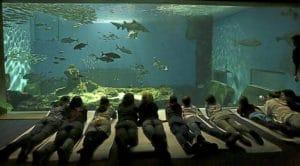 Dormir con tiburones, una experiencia inolvidable para los peques
