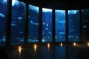 vistas increibles del fondo marino a través de los ventanales