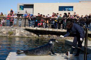 grandes y pequeños disfrutarán con las divertidas focas, descubriendo sus costumbres y cómo juegan