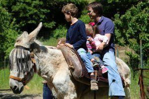 turismo con niños, diversión en familia en plena naturaleza con los animales de la granja