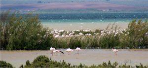 visita a la Laguna de Fuentepiedra