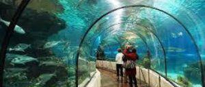 tunel de tiburones en sea life, una fascinantes forma de conocer cómo son y se mueven los tiburones