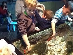 en sea life los pequeños podrán conocer y tocar especies como las estrellas de mar