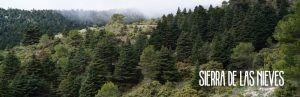 Disfrutar de la naturaleza que nos ofrece la Sierra de las Nieves