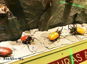 Centro de naturaleza dónde divertirse y aprender visitando y conociendo habitat, alimentación, formas, colores y mucho más.