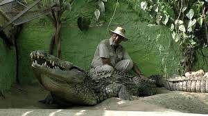 conocer la vida de los cocodrilos desde que su nacimiento hasta que son adultos.