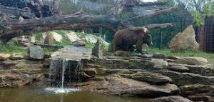 animales salvajes que podemos visitar y conocer junto a la naturaleza, vida salvaje y conservación, todo unido en el parque zoológico marcelle