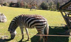 naturaleza, vida salvaje y conservación, todo unido en el parque zoológico marcelle