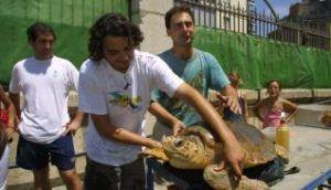 desde el Aula del mar se recupera especies en peligro encontradas en nuestras costas como la tortuga boba
