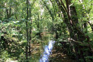 paisaje natural, arroyos naturales, vegetación otoñal.