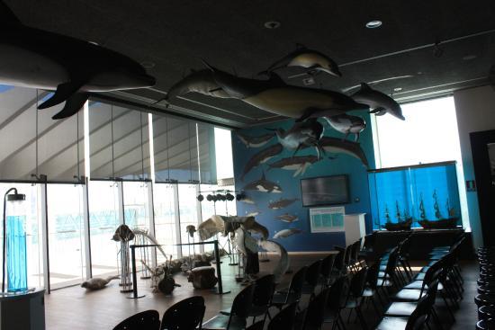 esta zona del museo Alborania nos enseña las grandes del mar, desde el Aula del Mar podemos conocer todo lo relacionado con el mundo marino