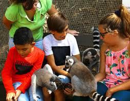 Conocer y disfrutar de animales como el Lémur, una de los privilegios de este campamento de verano de Selwo Aventura