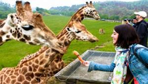 visita salvaje en el parque natural dónde disfrutar y conocer los animales muy cerca, además de disfrutar de la naturaleza