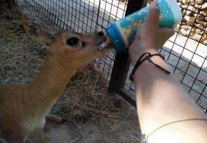 zoo castellar dónde disfrutar de los animales cerca, darles de comer, tocarlos, hacernos fotos