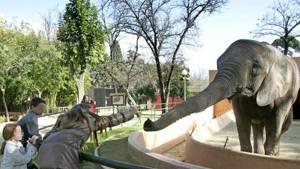 pasear y disfrutar de los animales que han sido rescatados y cuidados, todo y más en la visita al Zoo Castellar