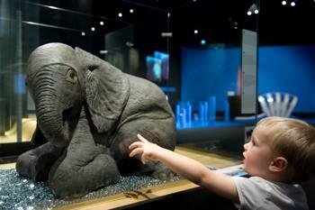 Exposición Bebés animales, una exposición didáctica y multisensorial.