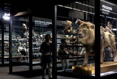 Exposición animal donde conoceremos el comportamiento animal desde su nacimiento